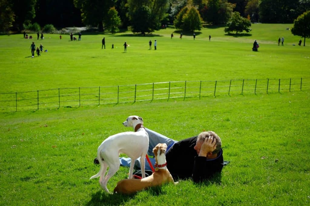 A man lying on grass beside two dogs