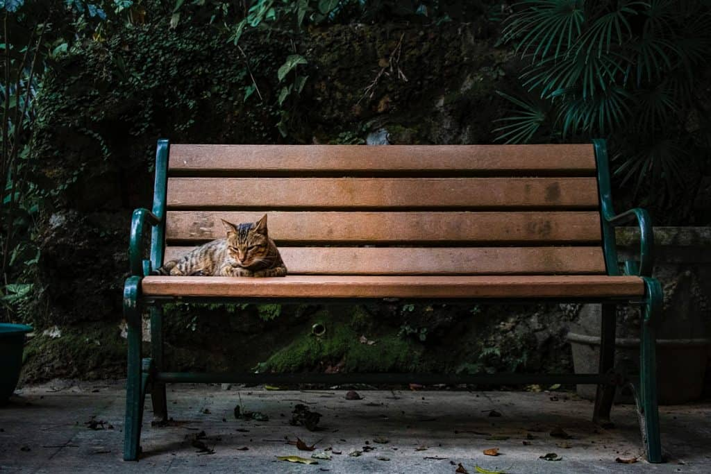 Cat sitting on an outdoor bench