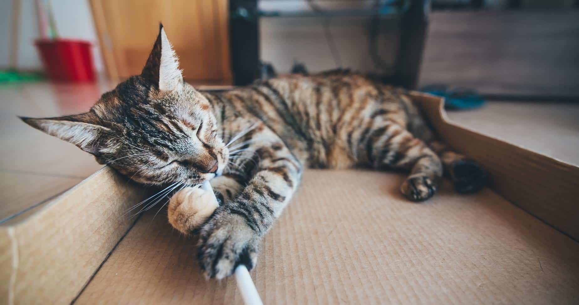 A cat lying on cardboard
