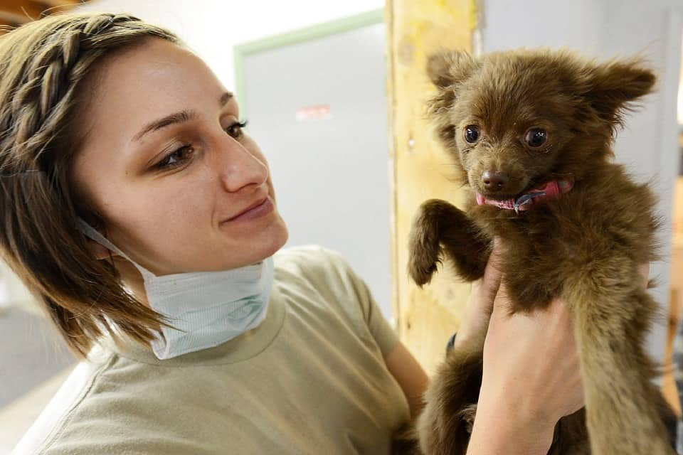 A veterinarian holding a puppy