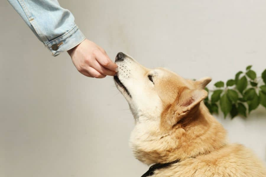 Dog being fed a healthy snack