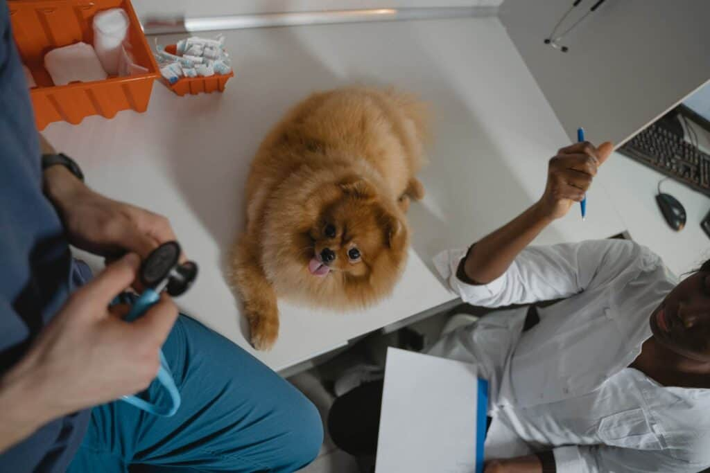 Small dog in a clinic for check-up